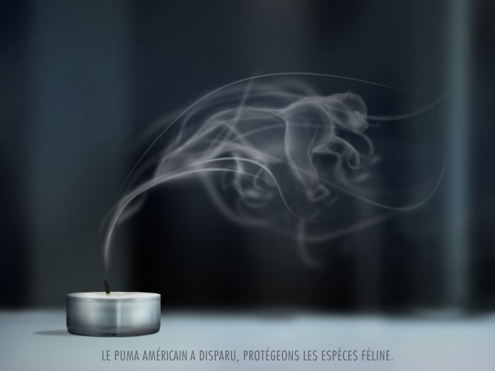 Chatons d'Or - FÇlins - Martin Deneuville