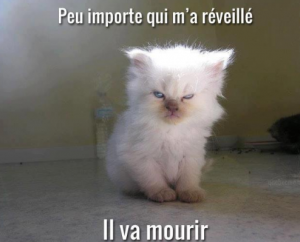 Chaton_reveil_resolution_CM_megane_amico