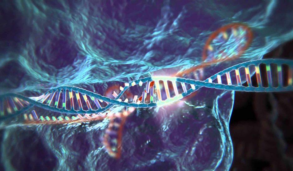 CRISPR est une biotechnologie capable de manipuler un gène pour le renforcer, ou lui retirer tous ses défauts