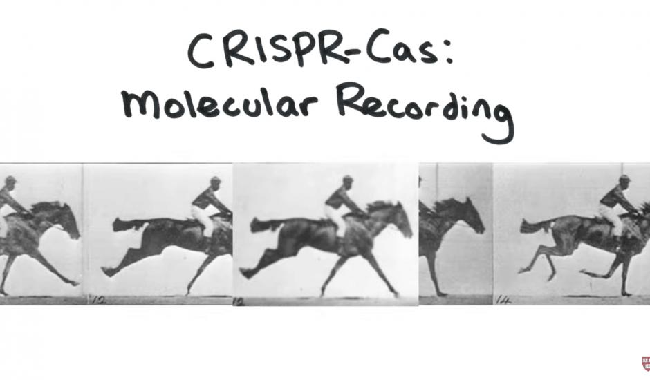 CRISPR GIF HARVARD