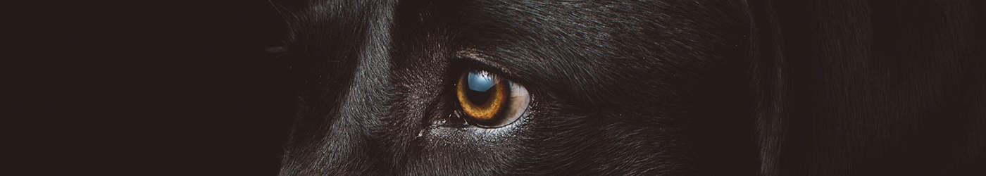 Livre sur l'influence : Les nouveaux chiens de garde livre de serge halimi