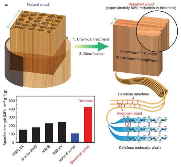 Des chercheurs créent un bois plus solide que de l'acier.