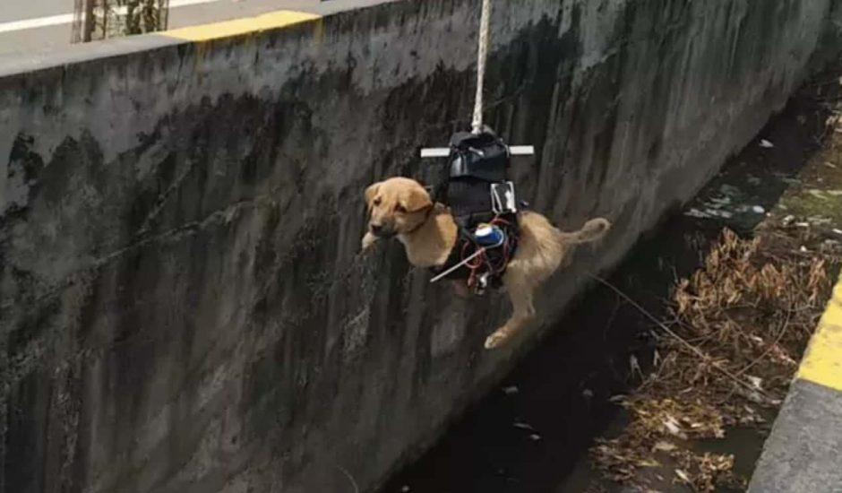 ingénieur chiot drone