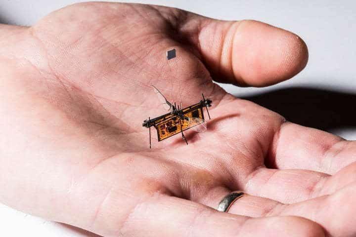 RoboFly : le premier robot de la taille d'un insecte, volant sans fils