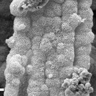 Mineral microscope