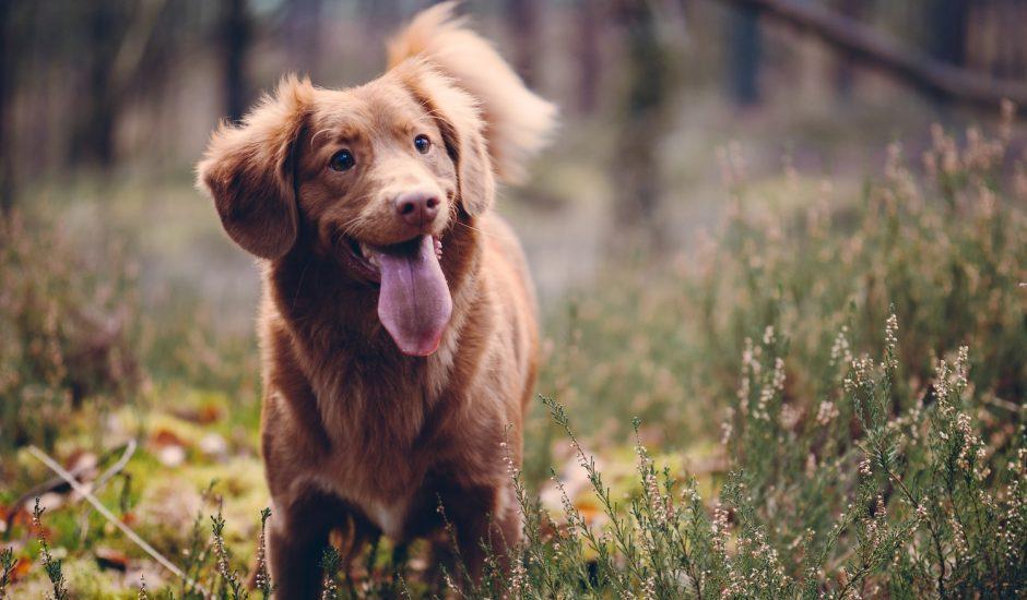 Est-ce que les chiens sourient ?