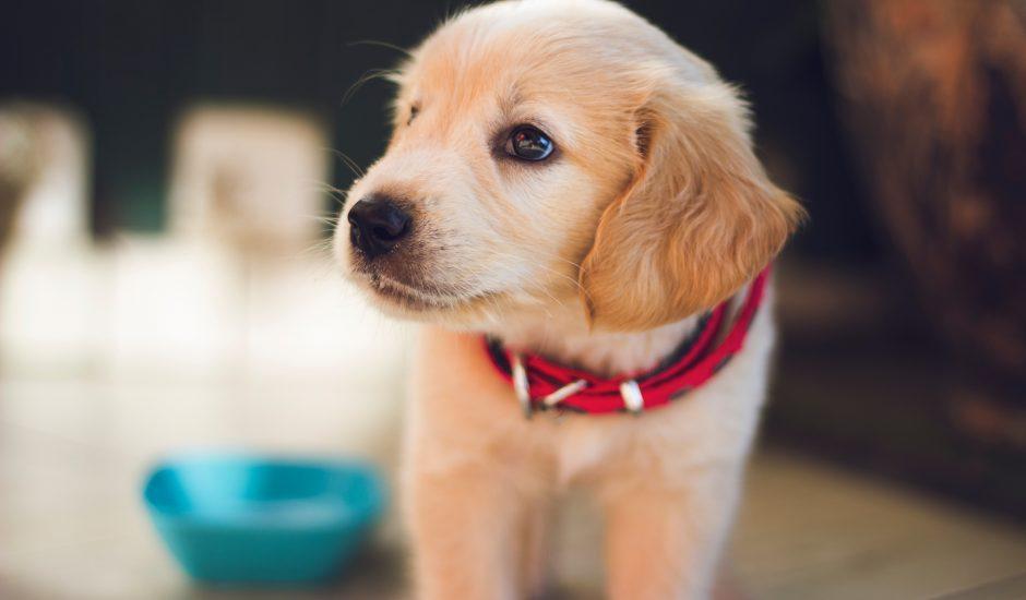 photo d'un chien