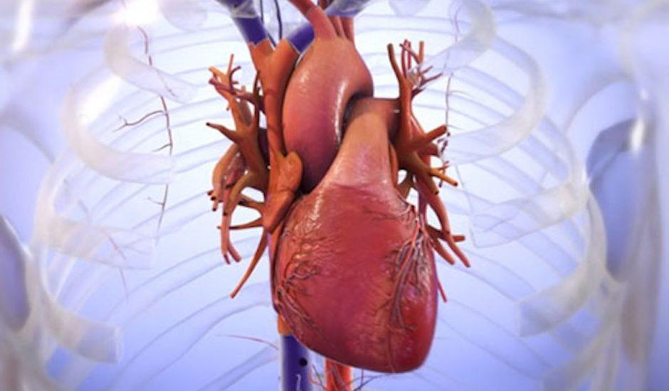 Un micro-coeur humain imprimé en 3D