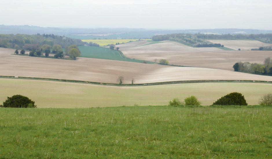 paysage de champs anglais