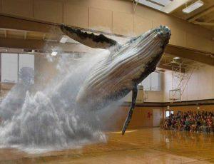 Une baleine saute dans un gymnase grâce à la réalité augmentée.